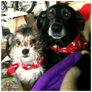 Sadie & Gracie